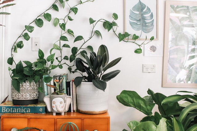 Perfect Hanging Indoor Plants That You Can Gift Your Loved One